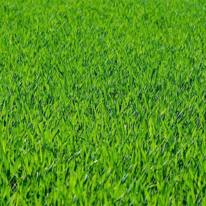 grass-275986